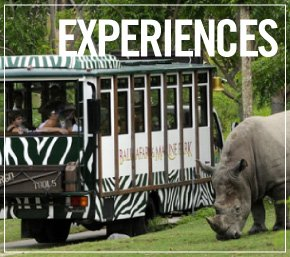 Bali Hotels Experience