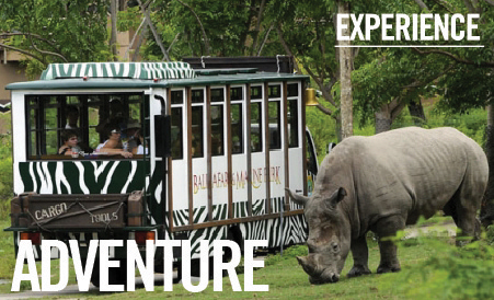 Bali Safari and Marine Park Adventure