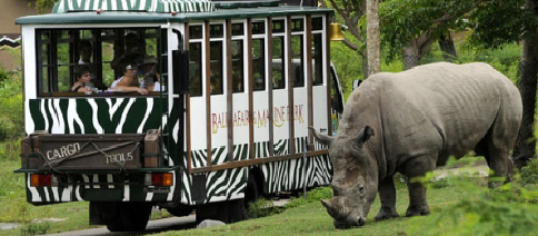 Bali Safari and Marine Park Adventure