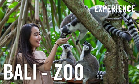 bali zoo activities